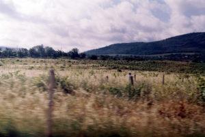 севастополь виноградники