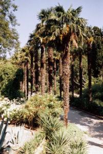 фото никитский ботанический сад ялта