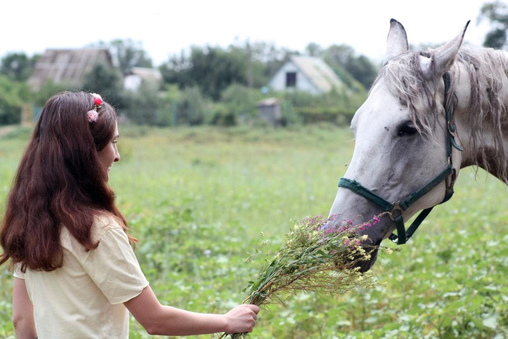 horse_meet
